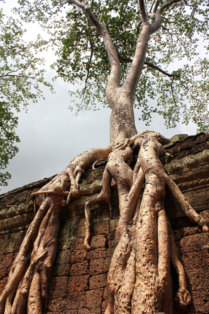 Trees taking over the temples
