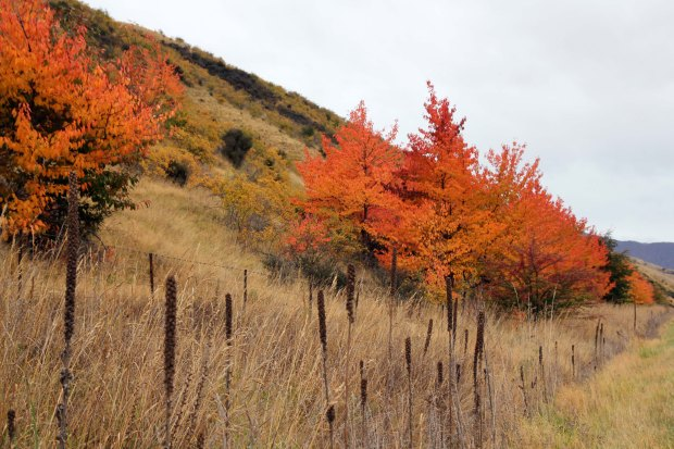 Vibrant orange trees by the side of the road