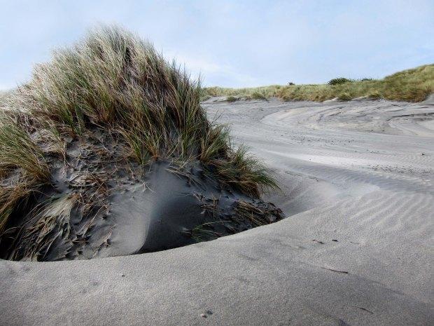 Dunes on Wharariki beach