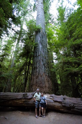 Tall trees on Vancouver Island
