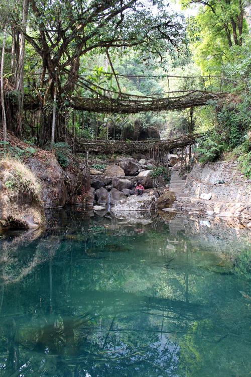 Living root bridges in Nongriat